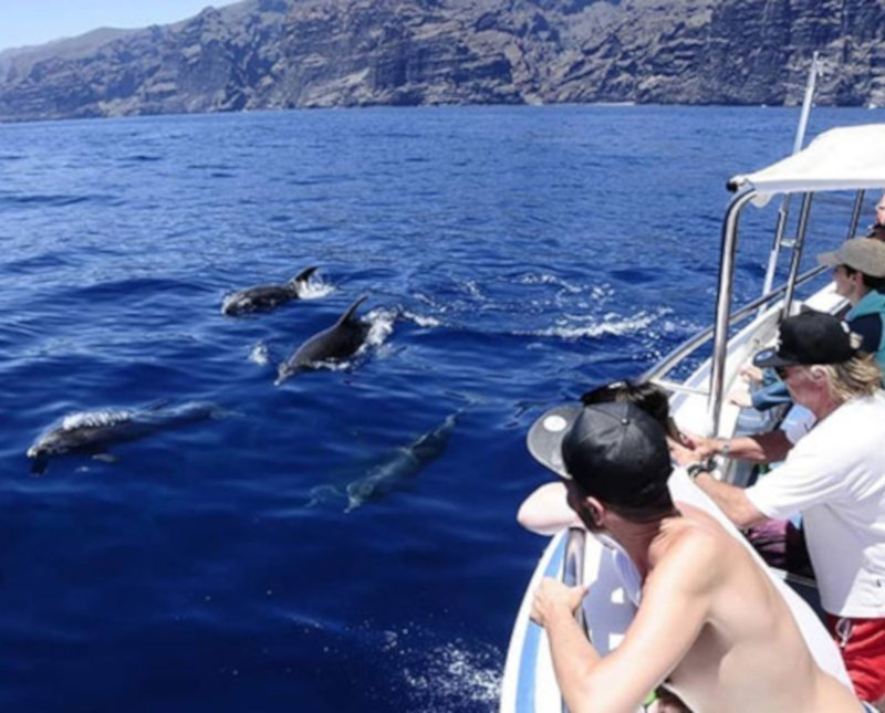 Costa Adeje things to do - Whale and Dolphin watching