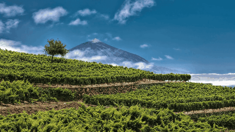 Costa Adeje things to do - Wine tours