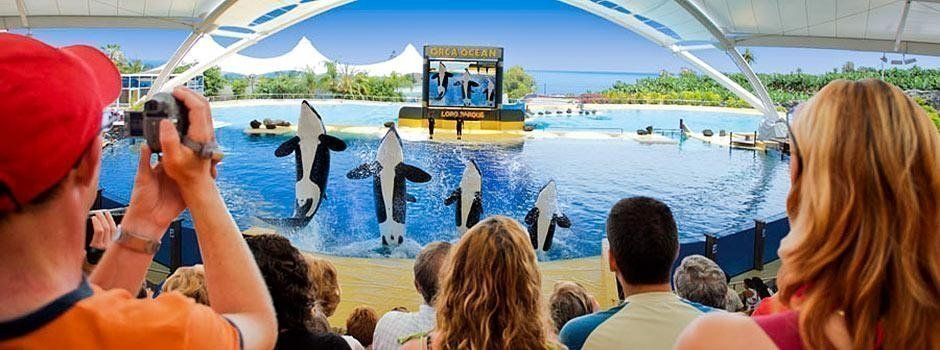 Activities in Tenerife - Loro Parque