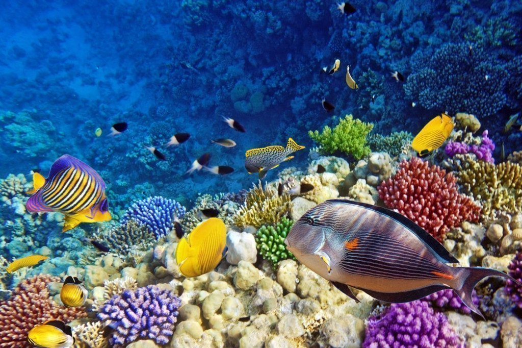 Egypt tours - diving in Red Sea.