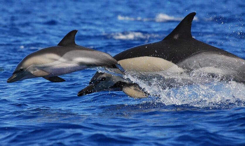 Activities in Tenerife - Whale and Dolphin watching