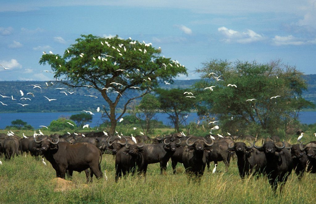 African Safari - wildlife by the lakes
