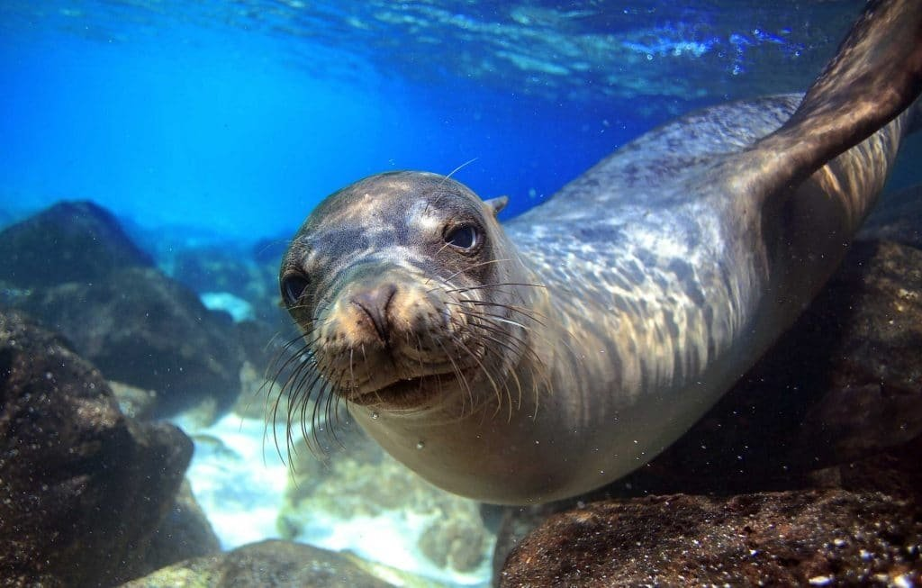 Things to do in Galapagos - diving