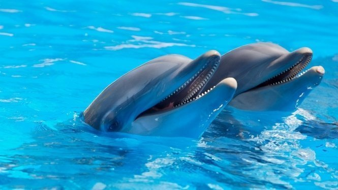 Things to do in Tenerife - swim with Dolphins