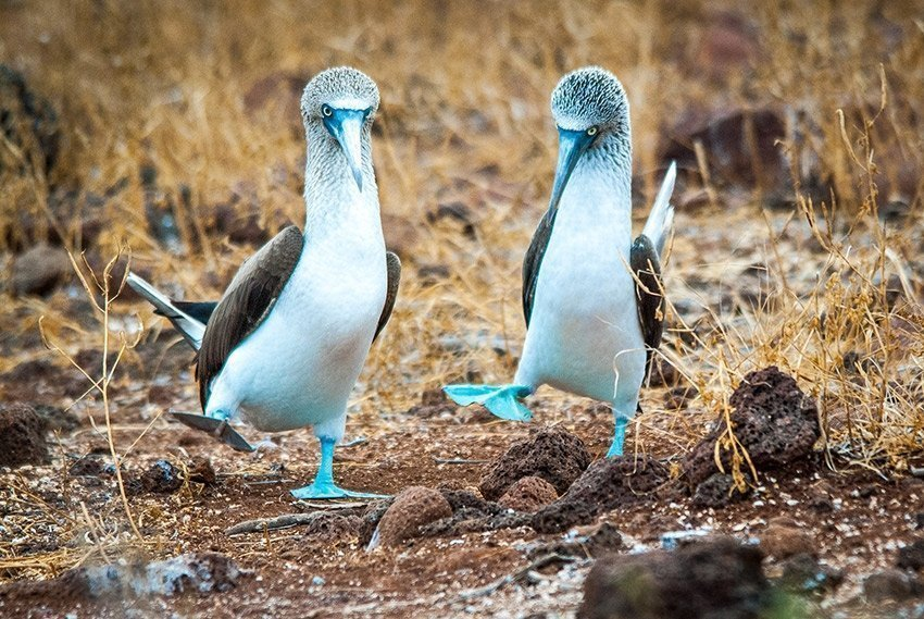 Things to do in Galapagos - Wildlife