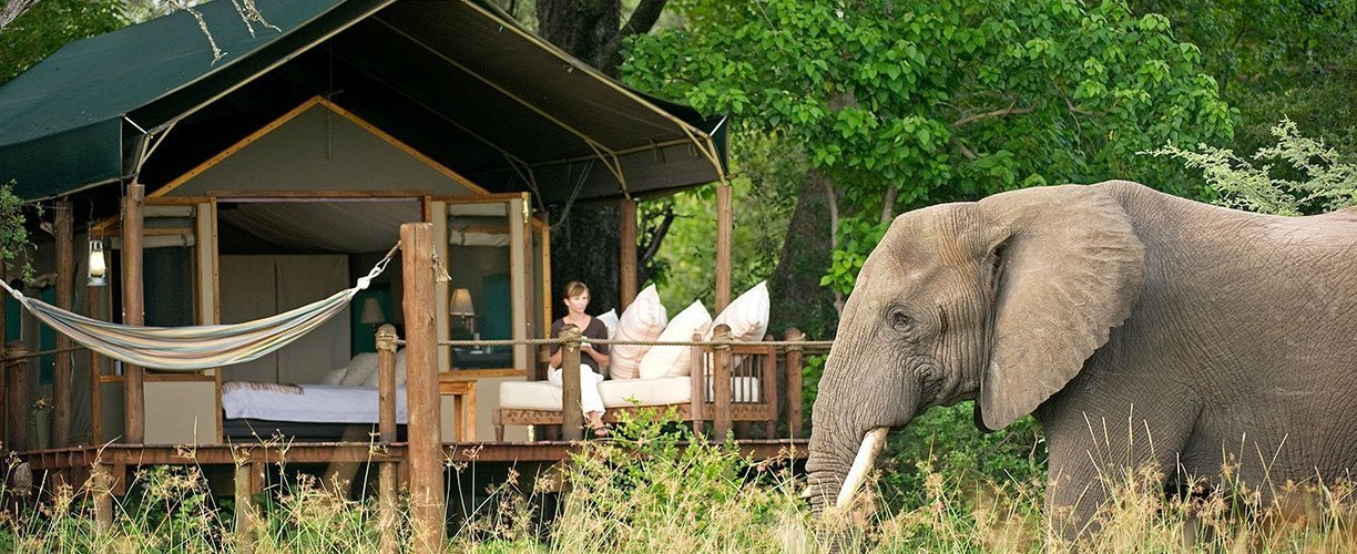African Safari - don't feed animals passing the camp!