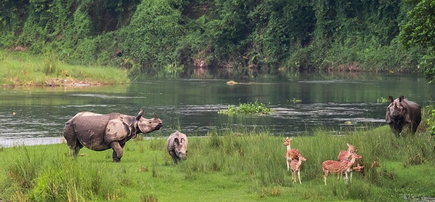 Visit Chitwan National park - a thing to do for wildlife lovers in Nepal