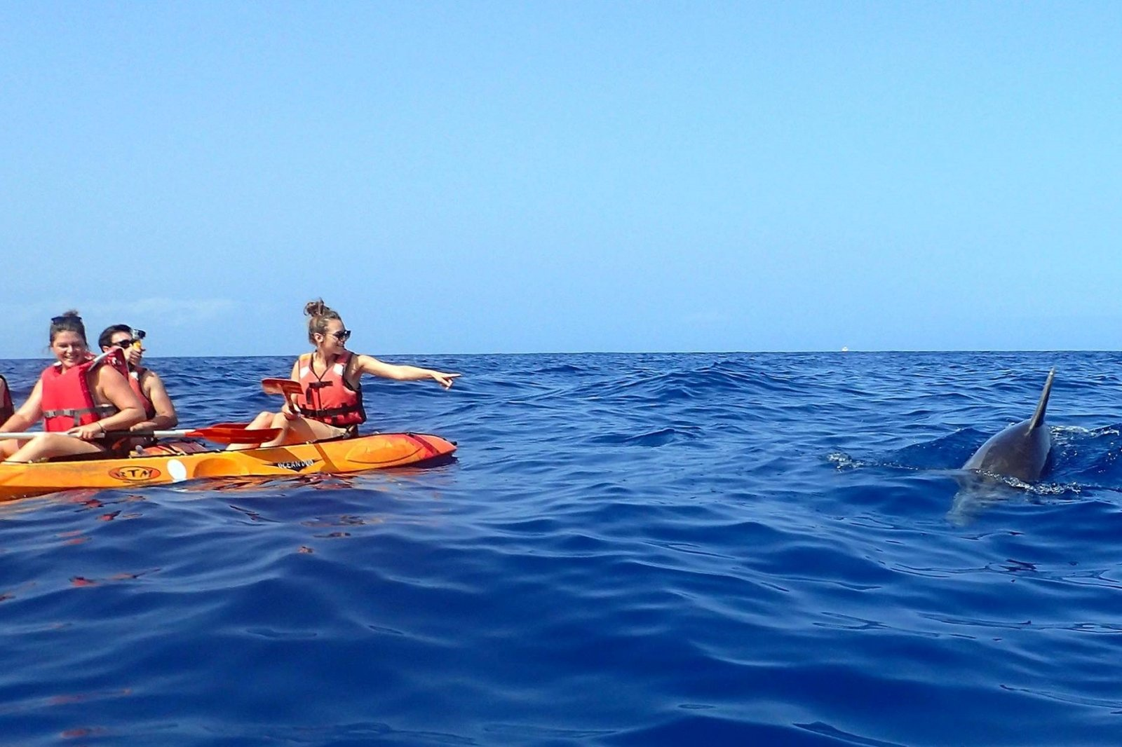 Things to do in Tenerife - Dolphin watching from Kayak
