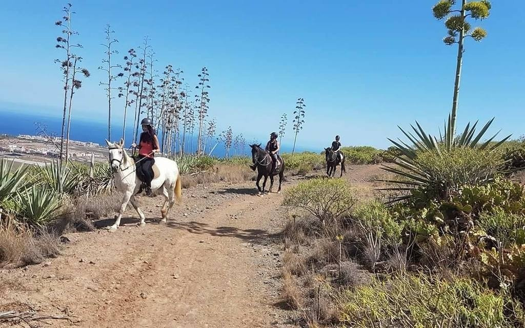 Things to do in Tenerife - Horse Riding